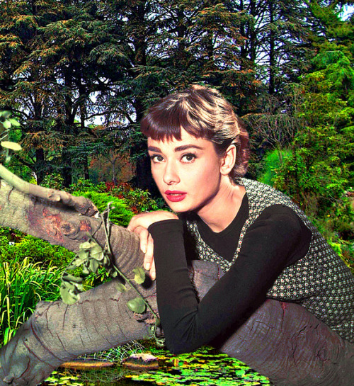 nature by horlo on Flickr.Audrey Hepburn ? no information on Flickr but 99. 999 % is her but……