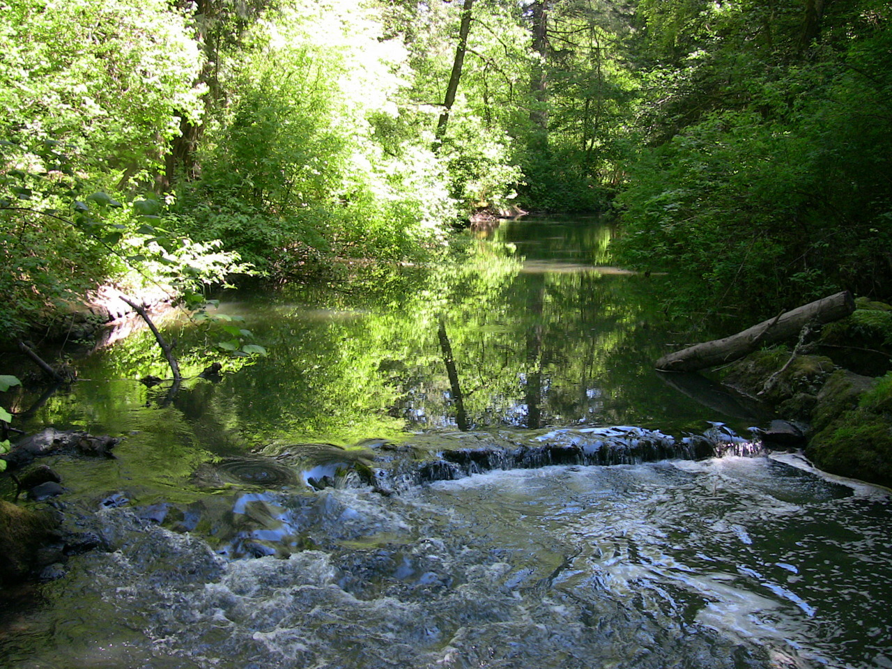 Johnson Creek flowing through the Leach Botanical Garden.