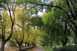 The overhanging trees with lots of fallen leaves as Bendigo is about to go into another 4 months of winter again.
