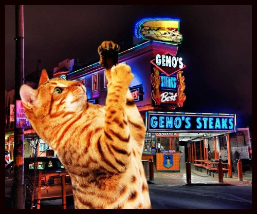 catjawn:  Philly Cat prefers Geno's