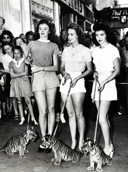 Jan Thomason, Wilma Morton and Beth Patton lead three baby tigers down a Miami street, 1946