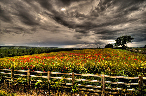hydrazine:  Poppy Field (by Richard Tierney)