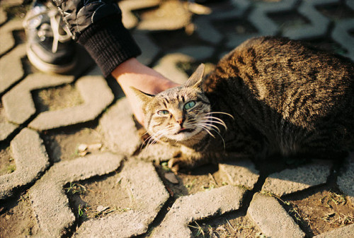 sextingsatan:  091122 (4) by 【miao】 on Flickr.