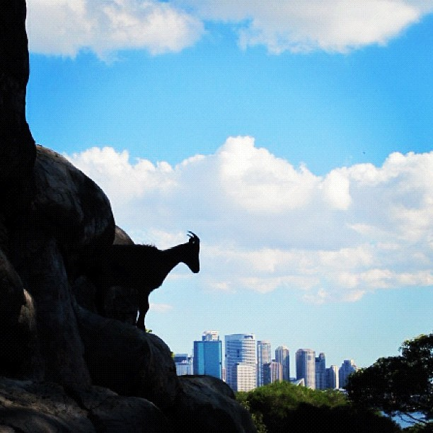 taronga zoo, sydney aus (Taken with instagram)