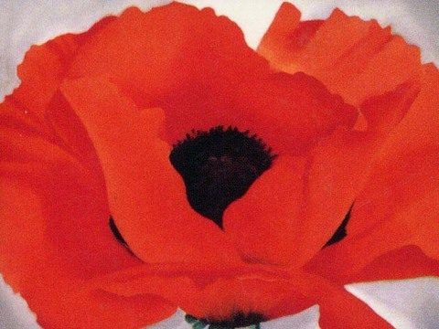 crazypluralworld:  GEORGIA O'KEEFERED POPPY (1927) Red Poppy (from a painting by Georgia O'Keefe)  'The meaning of a word is not as exact as the meaning of a colour'   So she walks out of the rectangles of hard, crowded America and floods the skies over southern plains   with carmine, scarlet, with the swirl of poppy-silk. There is music in it, and drumbeat.   You can put out the sun with poppy, lie in long grass with beetle and ladybird and shade your eyes with its awnings,   its heart of charcoal. Wine glasses held to candles or your veined lids against the sun.   The waters open for a million years, petal after petal in the thundering river, stamens of flying spray at its whirlpool heart.   Red mountain where the light slides through the beating red of every Texas dusk, and dark earth opens in a sooty yawn.   She paints out language, land, sky, so we can only look and drown in deeps of poppy under a thundering sun.   Gillian Clarke