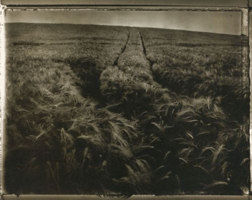 liquidnight:  Sarah Moon Field of Barley, 1997 From Coïncidences