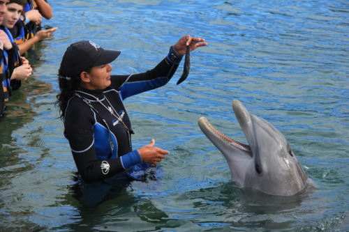 The beautiful trainer Alicia with the beautiful Dolphin Scarlett. =)