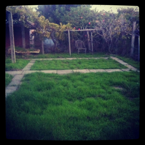 Day 14: Grass (my backyard wonderland)