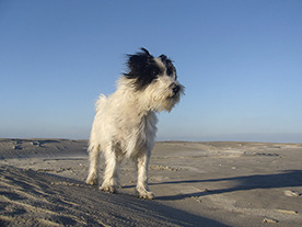 Whenever I am photographing on the island of Ameland and I am waiting for the light to change, my dog Gijs always watches me patiently from a distant. He is a great little companion and always comes along.