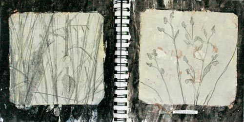 catherine-white:  Catherine White sketchbook images for plates Pasture meadow grass