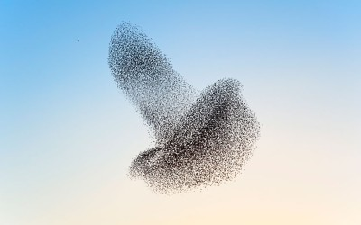 theanimalblog:  A flock of starlings form what looks like one huge bird hovering in the sky, in this photo taken by Rob Wolstenholme at Shapwick Heath National Nature Reserve in Somerset.  Picture: Robert Wolstenholme/ Solent News & Photo Agency