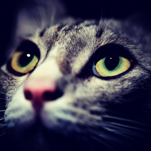 #cat #kucing #pet (Taken with Instagram at Full Time Dreamer Studio)