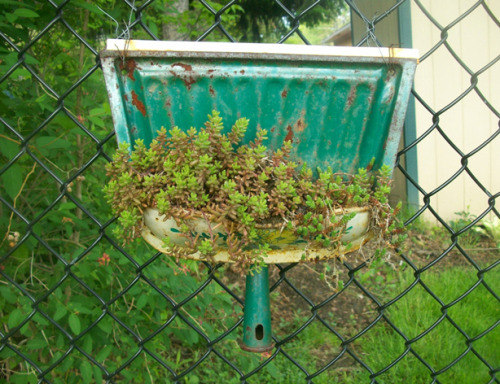 gardensinunexpectedplaces:  From dustpan to garden. (via Urban Gardens)