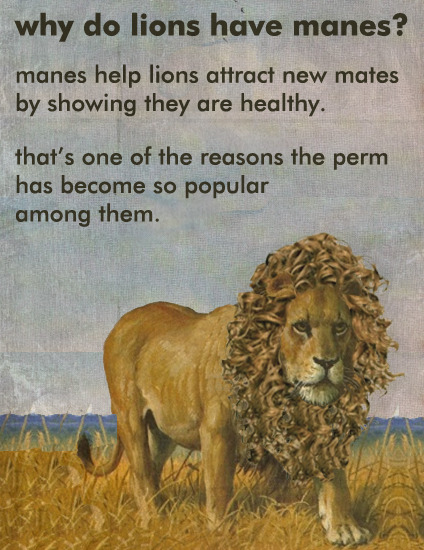 Why Do Lions Have Manes?