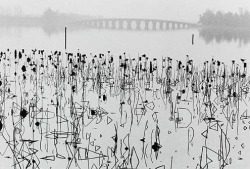 Rene Burri - Former Summer Palace, Dead Lotus Flowers on the Kunming Lake, Beijing, China 1964.