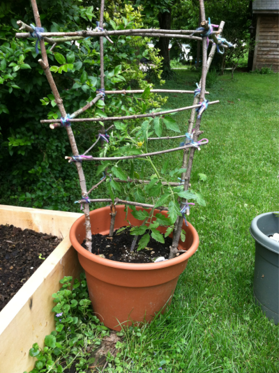 Homemade tomato cage from twigs and yarn. 1of 3