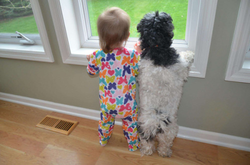 tballardbrown:  Cute overload on a Monday. 20 Best Friends Who Are Planning Their Lives Together   Try not to smile.