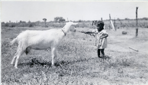 "riversidearchives:  Happy National Dairy Goat Week! This week is the week where we Americans recognize the Dairy Goats and Dairy Goat Farmers that give us such delightful snacks as Feta Cheese and Cajeta (also called Dulce de Leche)!  This photo is part of a series of Farm Extension Reports from the 1930's and 1940's created by the Bureau of Indian Affairs, held at the National Archives at Riverside.  The caption read, ""Reciprocity:- The baby feeds the goat; the goat feeds the baby.  Leonard and Eva Hill bought the goat with $3.00 of their R.C.F. loan because their baby- a younger one- was not thriving on cow's milk.  The goat milk proved to be satisfactory."""