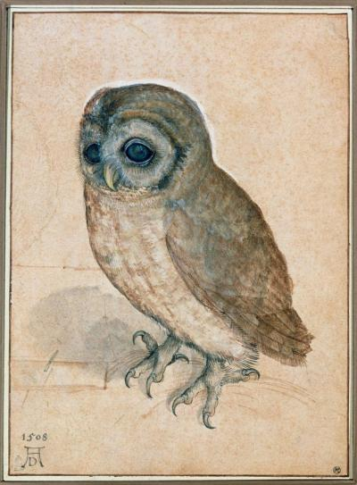 Albrecht Dürer The Little Owl, 1508