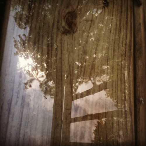 Reflecting wet wood… #popular #gmy #gmystudios #iphoneography #instagramer #instagramers #art #iphone #photography #nature #photos #photooftheday #cnnireport  (Taken with instagram)