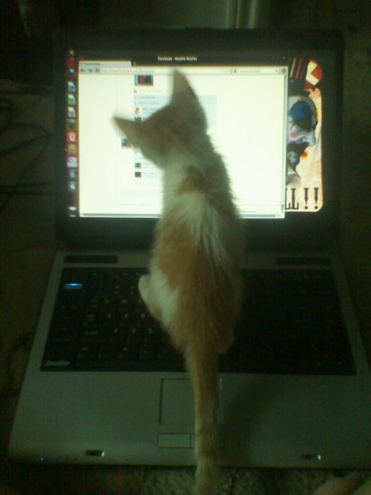nismo's addicted to the internet just like her mommy