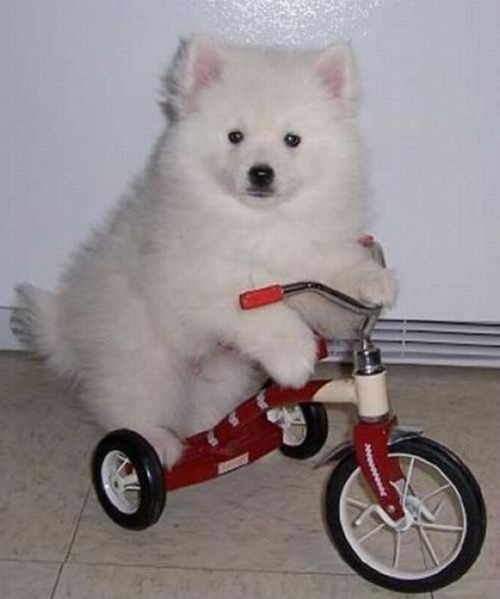 What can be cuter than a puppy on a tricycle?? :-)