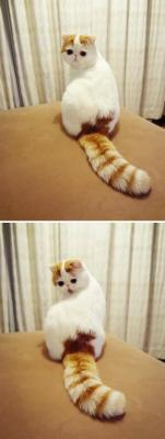 i would give someone a kidney for this cat, literally i will give anything to give this cat a hug