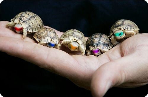 teenagemutanninjaturtles. <3