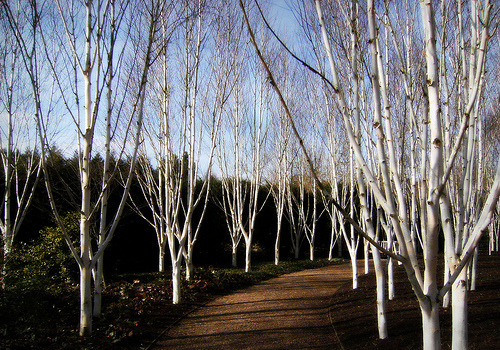 outdoorsanctuaries:  Anglesey Abbey (by ♥♥ Anna ♥♥)