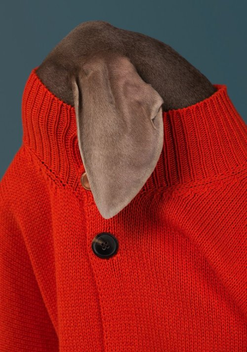 the-hierophant:  William Wegman for Man About Town magazine