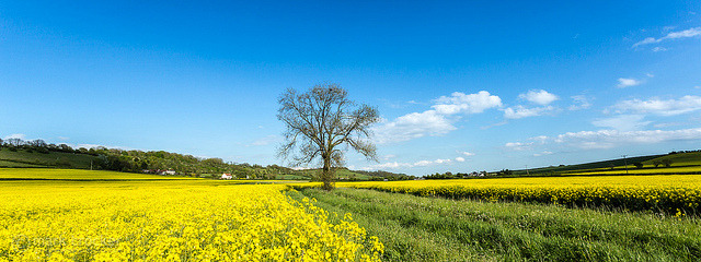 Cutting through a sea of yellow by images through a lens on Flickr.
