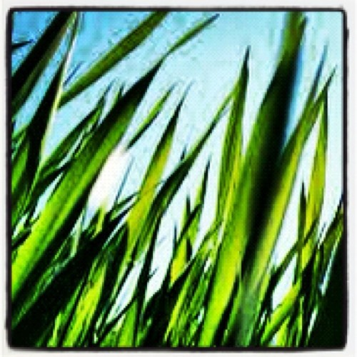 #photoadaymay #grass (Taken with instagram)