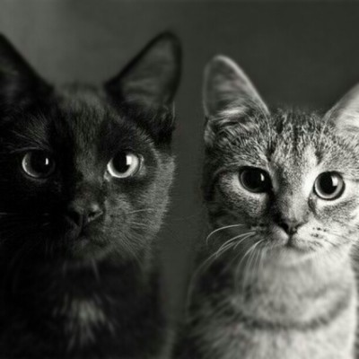 thatgay-kid:  #cats #cat #cute #popular #awe #gay #black #white (Taken with instagram)