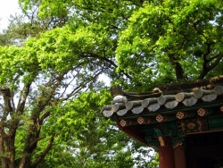 The gate roof photo by me Jeonju, South Korea