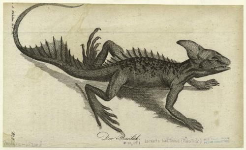 compendium-of-beasts:  Der Basilisk. (1803-1805)  via NYPL