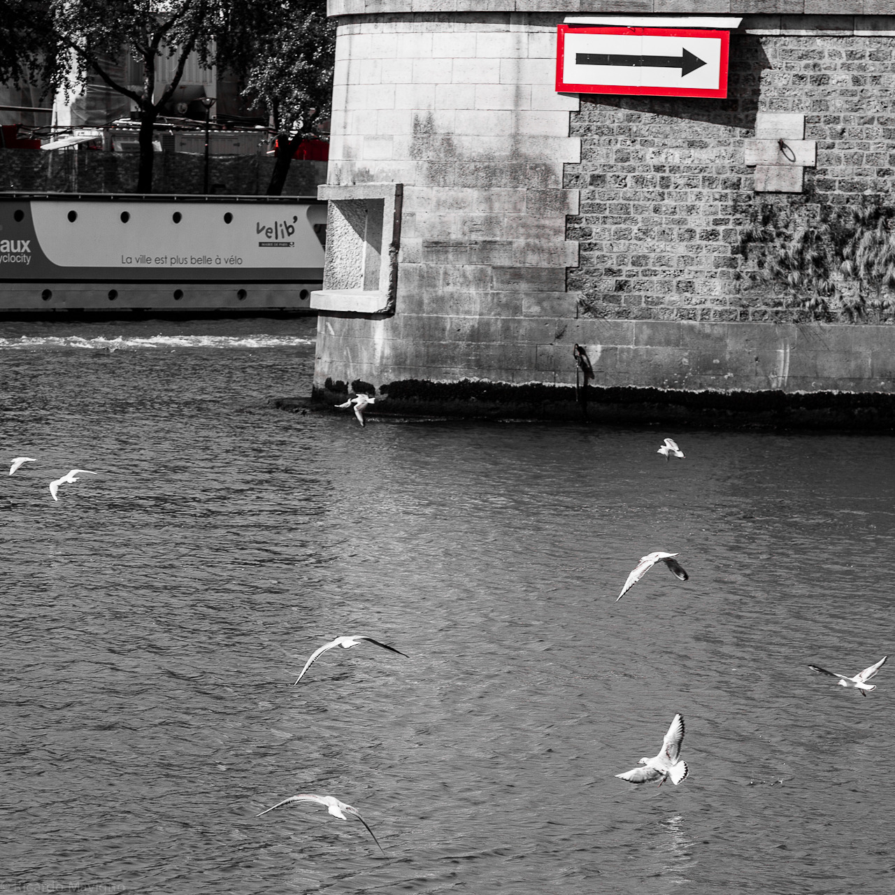 Paris 08 - Doves don't read signs :-)  by Ricardo Mavigno