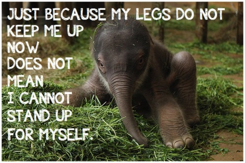 "[IMAGE DESCRIPTION: A TWO-DAY OLD BABY ASIAN ELEPHANT TRIES TO STAND AS HE GETS USED TO HIS WOBBLY LEGS. TEXT READS, ""JUST BECAUSE MY LEGS DO NOT KEEP ME UP NOW DOES NOT MEAN I CANNOT STAND UP FOR MYSELF.""]  PHOTO BY: SEAN GALLUP"