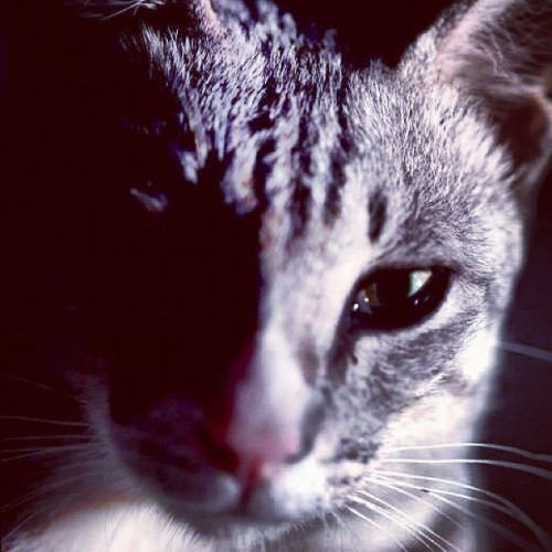Jom lawan gambar kucing #pet #kucing #cat  (Taken with Instagram at Full Time Dreamer Studio)