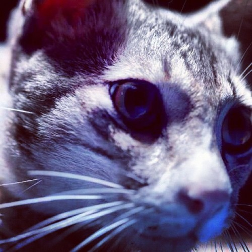 @nadrahradzi nah lagi #cats #catsofinstagram #cat #kucing  (Taken with Instagram at Full Time Dreamer Studio)
