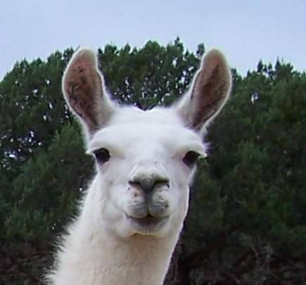 llama fuck you up!!11!!1!