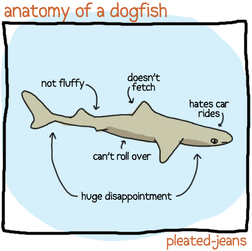 pleatedjeans:  anatomy of sea life