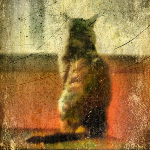 The Bird Stalker… #emotionalorphan #antiqued #iphoneography #iphonesia #instagram  (Taken with instagram)