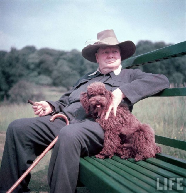 The one and only Winston Churchill and his dog Rufus. Sammy still dreams of a chocolate lab named Winston. (HT to GFOP Henry Weiner)