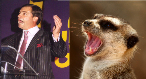 thanks to @juliathegenius  (Meerkat photo courtesy of Scott Randall http://scottseyephotos.files.wordpress.com/2011/10/dsc_2684wm1.jpg)