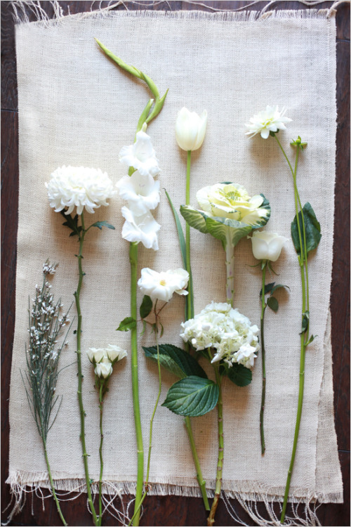 lindasinklings:  on white. via (roadsidesunflower)