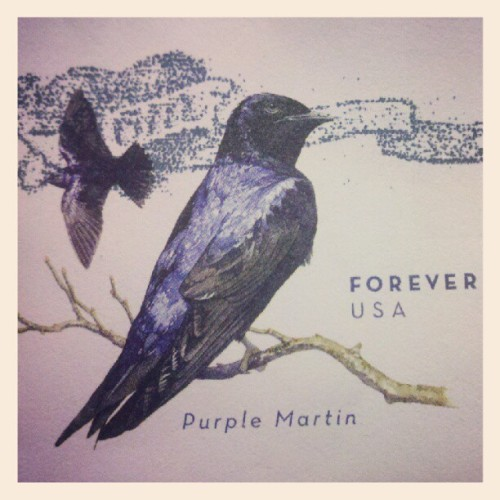 I'm in love with this #stamp #purplemartin (Taken with instagram)