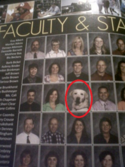 "Dog Pictured on Faculty Page of Yearbook ""I don't have my assignment today. My teacher ate my homework."""
