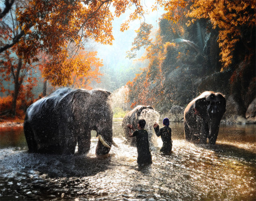 Elephant bathing by Auttapon Nunt