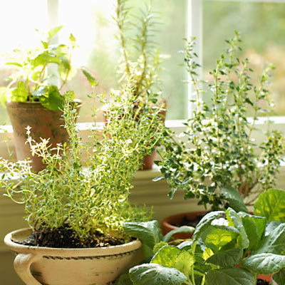 Read this to learn why you might want to ditch certain indoor plants…