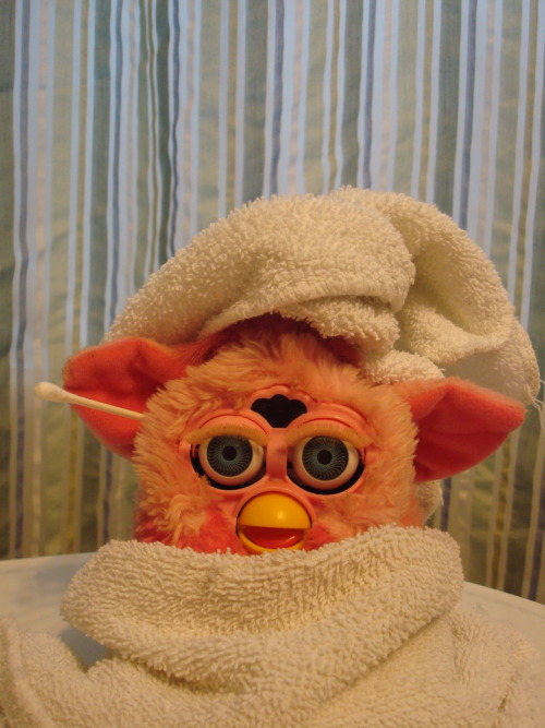 interweber:  pinkfurbyadventures:  Fresh out of the shower.  Great blog.